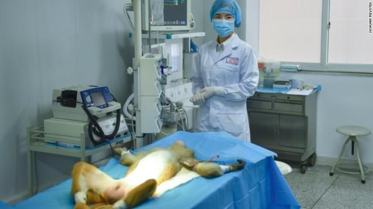 170105170140-china-3d-printed-blood-vessels1-exlarge-169.jpg