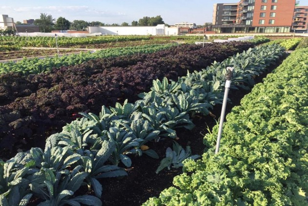 Green_Roof_Filled_With_Vegetables